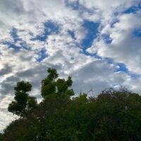 King Crimson's The Sheltering Sky